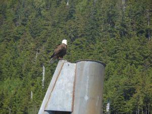 Alaska Grand Adventure 028