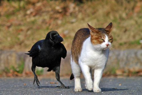 bird & mad cat