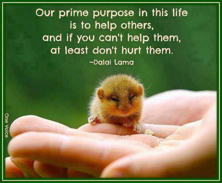 Dalai lama sez (2)