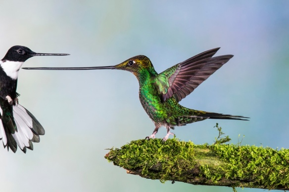 hummingbird warriors