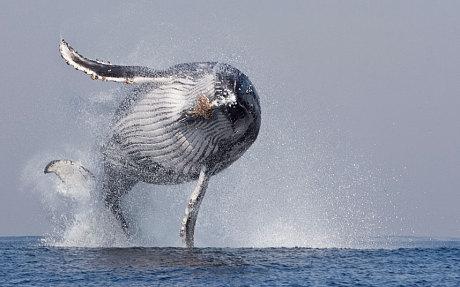 potd-whale_3060891c