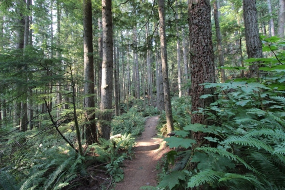 s and m dog walk Cascades 2