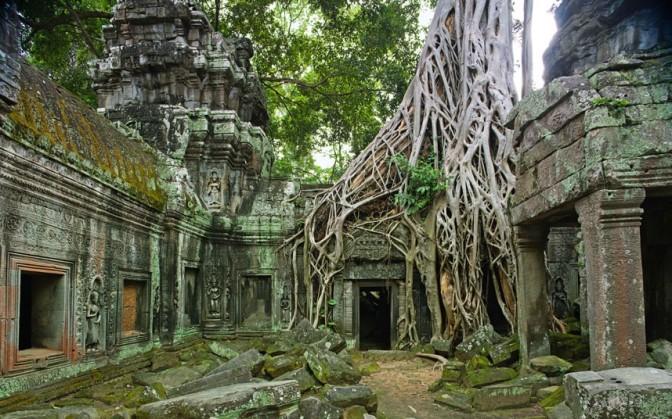 trees-angkor_uktel-8-6-15