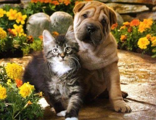 photos-of-dogs-and-cats-together
