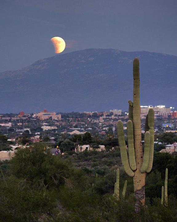 supermoon-eclipse-over-arizona-cactus