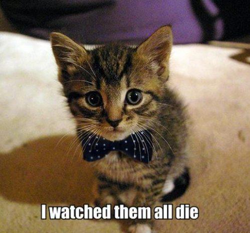 random kitty