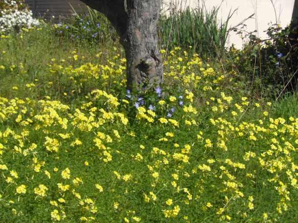 spring in vallejo