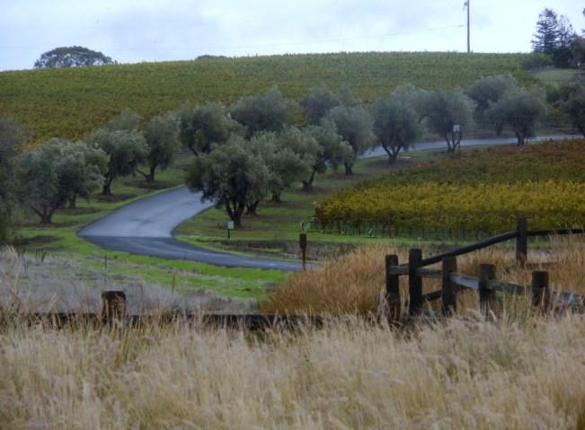 winery-drive