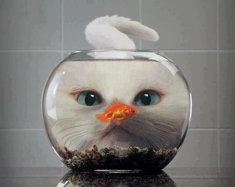fishy cat