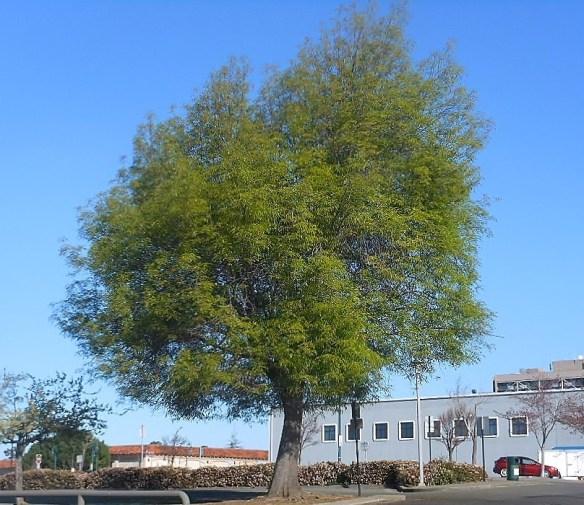 spring tree 17