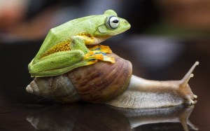animals-frog_uktel-8-4-15