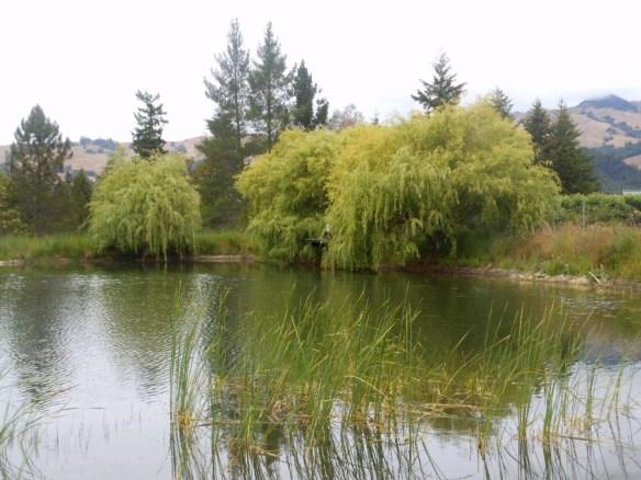 Fooles pond