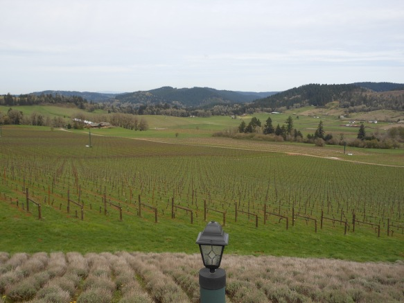 eugene vineyards